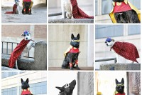Super Hero dogs