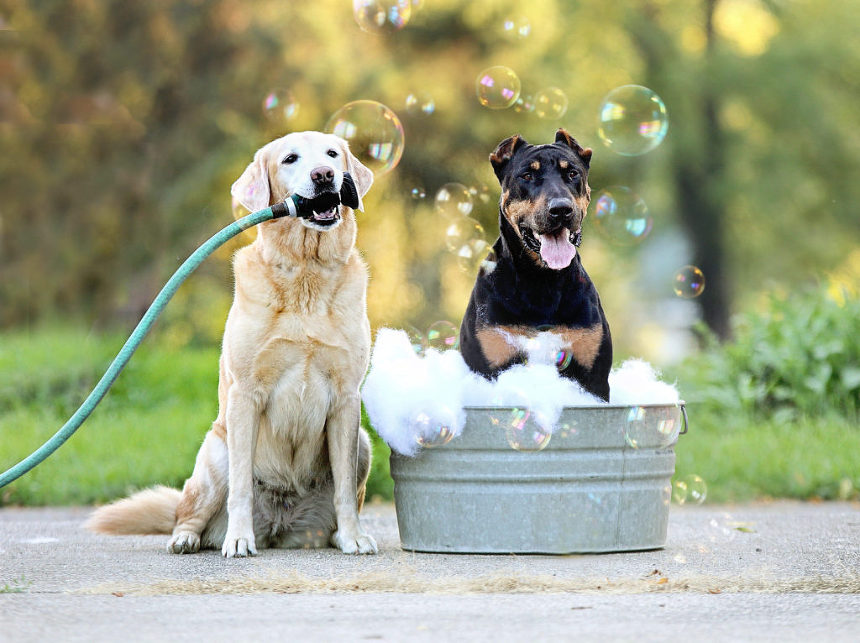 Two dogs taking a bubble bath.